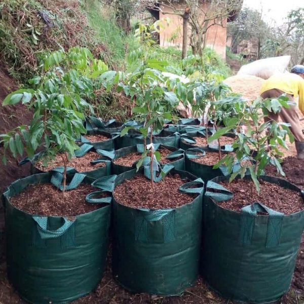Planter Bag 100 ltr