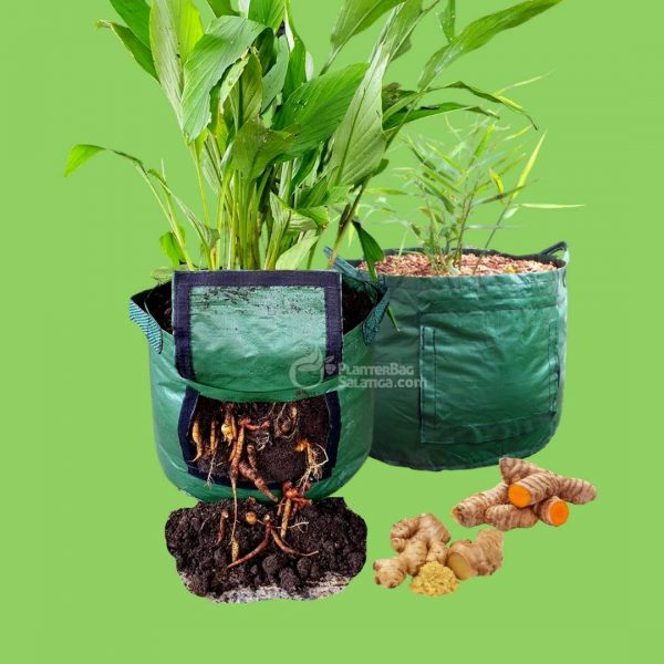 Rhizoma Planter Bag Merk Easy Grow